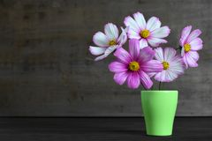 Mothers Day card with Mothers Day flowers. In the flower pot royalty free stock images