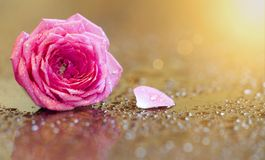 Mothers day card, pink flower on golden background with copy space stock photos