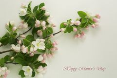 Mothers Day card. White flowers on a light gray background. Spring blooming apple Stock Image
