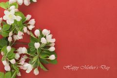 Mothers Day card. White flowers on a red background. Spring blooming apple Royalty Free Stock Images