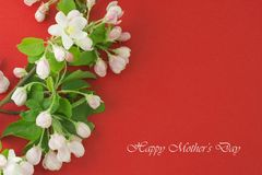 Mothers Day card. White flowers on a red background. Spring blooming apple Royalty Free Stock Photography