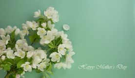Mothers Day card. White flowers on a turquoise background. Spring blooming apple Stock Photos