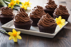 Mothers day  chocolate cupcakes  with spring flowers Royalty Free Stock Image