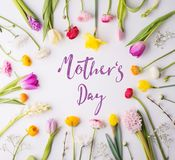 Mothers day composition. Flowers on white background. Studio shot. Stock Images