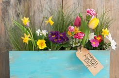 Mothers day gift flowers Royalty Free Stock Images