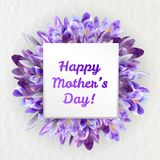Mothers day greeting card with crocus flowers. Mothers woman day greeting card poster banner template  with purple violet saffron crocus flower frame and copy Royalty Free Stock Photos