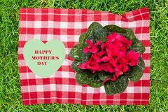 Mothers day greeting card. Decorative composition of red checkered napkin with fresh blooming cyclamen flowers and a green heart