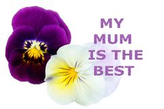 Mothers day greeting card My Mum is the Best, stock images