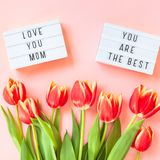 Mothers Day greeting card with red tulip flowers. Creative flat lay top view Mothers Day greeting card with red tulips spring flowers on pink background royalty free stock image