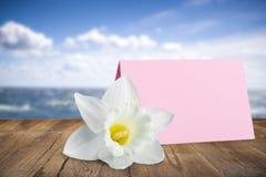 Mothers day. Gift single flower celebration daffodil envelope ribbon royalty free stock photo