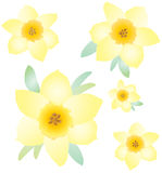 Mothers Day pattern. Hand-drawn yellow Daffodil flowers on white background. Vector illustration vector illustration