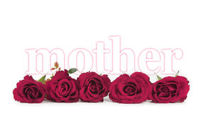 Mothers Day Roses on white background. Banner of five deep pink rose heads lying in a row with the word mother, delicately outlined in pink emerging from behind Stock Photo