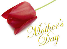 Mothers Day Type with Tulip Stock Photography