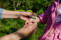 Mothers hand adorned baby hands with white daisy Royalty Free Stock Photo