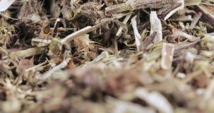Motherwortgräs i massa lager videofilmer