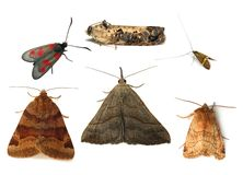 Moths Stock Image
