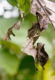 Moths Royalty Free Stock Image