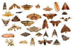Moths Stock Photo