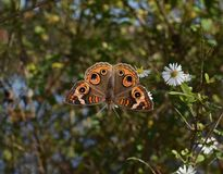 Moths And Butterflies, Butterfly, Insect, Invertebrate stock photography