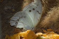 Moths And Butterflies, Butterfly, Insect, Invertebrate stock image