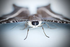 Moths, butterfly Stock Photos