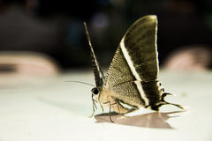 Moths, butterfly. Beautifully colored moths in the night Royalty Free Stock Image