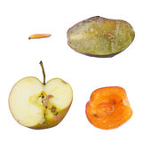 Moths on fruit. Small white worm on a fruit Stock Photo