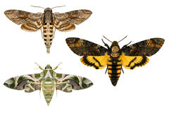 Moths. Stock Photo