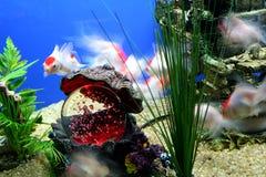 Motie in de Oceaan royalty-vrije stock foto's
