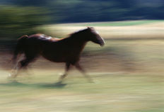 Motieonduidelijk beeld op een bruin paard Stock Foto's