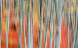 Motieonduidelijk beeld van bomen Stock Foto