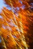 Motieonduidelijk beeld van bomen in een de herfstbos Stock Foto's