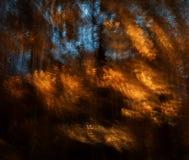 Motieonduidelijk beeld van bomen in een de herfstbos Royalty-vrije Stock Fotografie