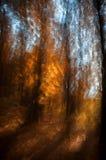 Motieonduidelijk beeld van bomen in een de herfstbos Stock Afbeelding