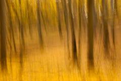Motieonduidelijk beeld van bomen in een de herfstbos Royalty-vrije Stock Foto's