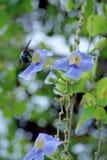 Motiewesp die rond bloemen vliegen stock foto