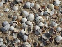 海洋motifs4 库存图片