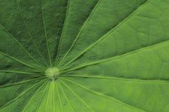 Motifs of lotus leaf Royalty Free Stock Photos