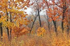 Motim colorido da floresta do outono das cores Verão indiano Autumn Landscape Caminhadas na floresta fotos de stock