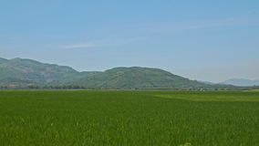Motion along Ground Road by Rice Field against Hill Blue Sky stock video footage