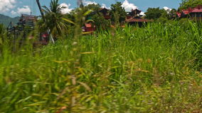 Motion along Rice Field against Red Roofs Crane Blue Sky stock footage