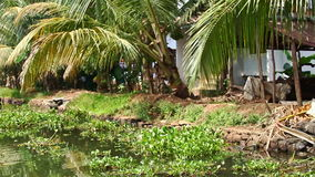 Motion along River Bank with Nice Fence Houses in Tropics stock video