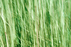 Motion blur abstract in nature Royalty Free Stock Photo