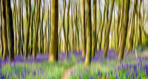 Motion Blur Bluebell Woods Royalty Free Stock Photography