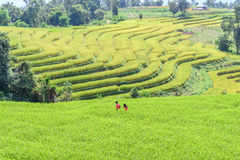 Motion blur of couple walk leisurely romance in rice field Royalty Free Stock Images