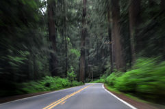 Motion Blur through Forest Royalty Free Stock Photography