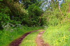 Motion blur forest road Royalty Free Stock Photo