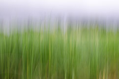 Motion blur on grass. Abstract motion blur on grass, yellow green background Royalty Free Stock Photos