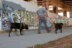 Motion Blur Of Man Walking Two Dogs In Urban Setting Stock Photo