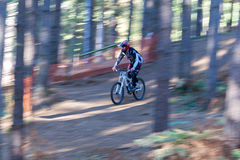 Mountain Biker. A male downhill Mountain Biker goes down the hill amongst the trees at speed stock photography